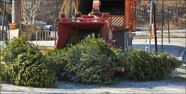 5 Eco-friendly Ways to Recycling Christmas Trees