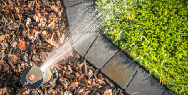 Sprinkler system, mulch and grass depicting how to save money watering your lawn and trees