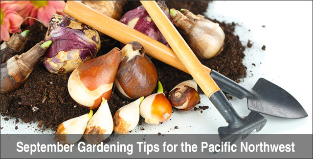 September Gardening Tips for the Pacific Northwest