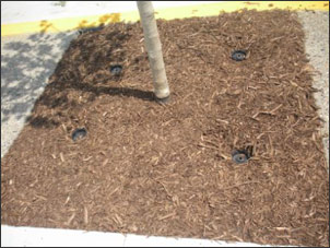 Sidewalk tree plantings with Rootwell Pro-318s