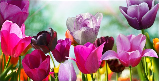 5 early spring flowers that will dazzle your backyard mightylinksfo