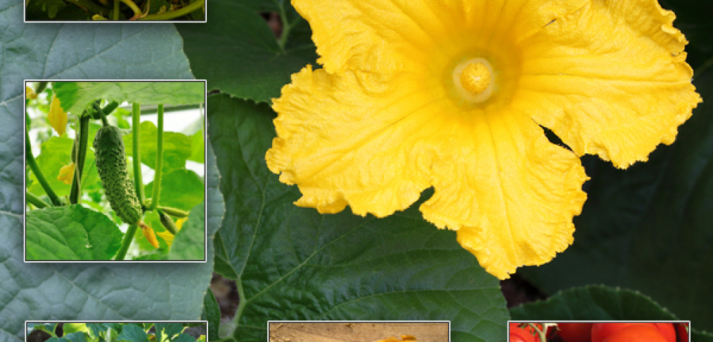 5 Summertime Vegetables to Plant Now