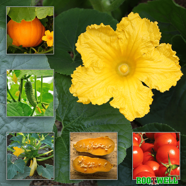 What Vegetables To Plant Now: 5 Summertime Vegetables To Plant Now