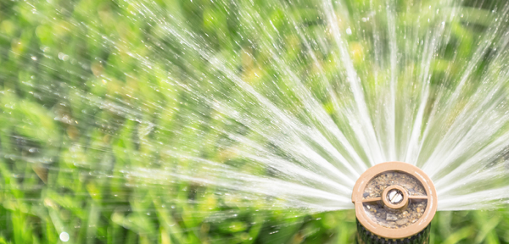 8 Summertime Watering Tips You Need to Know