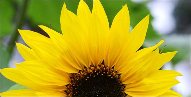 6 Super Easy Annuals To Grow