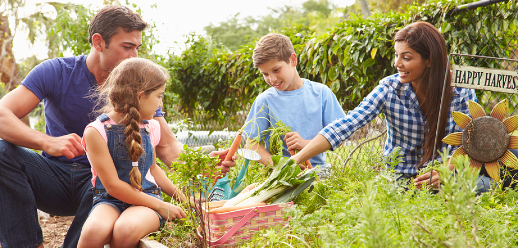 Parents teaching kids gardening
