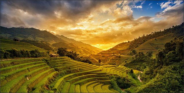 Rice fields terrace gardening at Mu Cang Chai, Yen Bai, Vietnam.