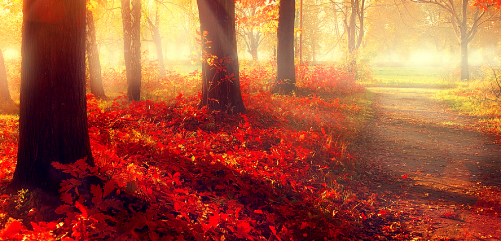 Tree trunks in autumn