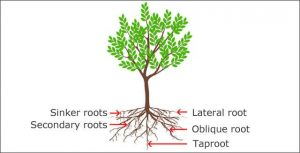 Rootwell Pro-318 is Better Than Gatorbags for Tree Root Growth