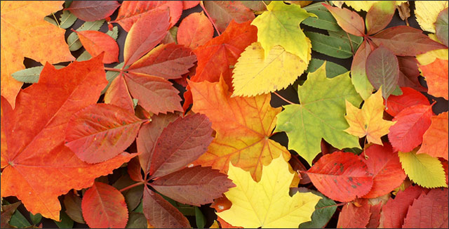 10 Of The Best Trees And Shrubs For Beautiful Fall Color