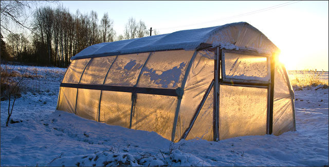 Plastic greenhouse for vegetable gardening year-round