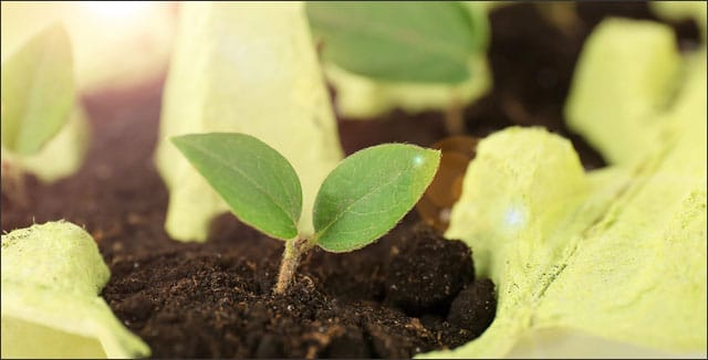 Zero waste tip: Use cardboard egg cartons to grow seedlings